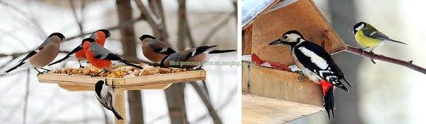 Кормушка для диких птиц: варианты, чертежи, чем наполнить и для кого?