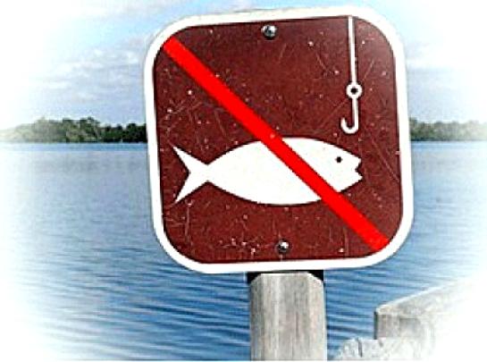 на что нельзя ловить рыбу в нерестовый