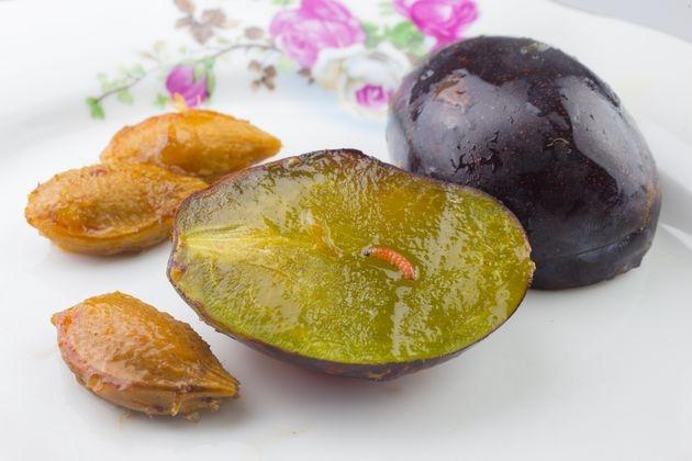 Все, что нужно знать о сливовой плодожорке