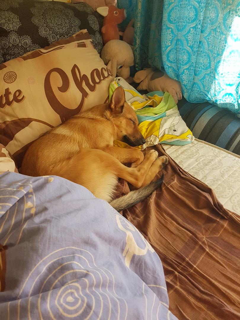 Она сидела, опустив мордочку… Семья решила забрать щенка домой и не ошиблась в выборе!
