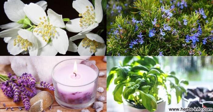 8 растений, которые помогут очистить воздух в вашем доме
