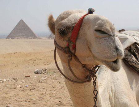 Мой Египет