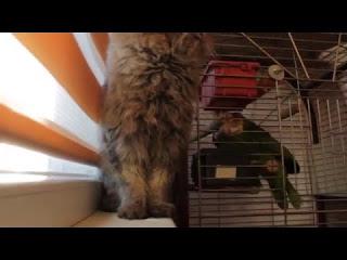 Хищные попугаи и кот-вегетарианец
