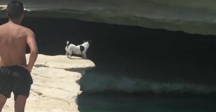 Стремительный прыжок песика …