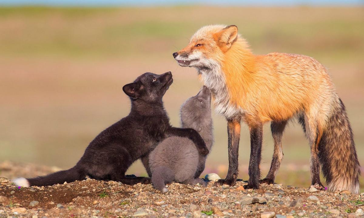 Изумляющие фотографии дикой природы с конкурса LUMIX People