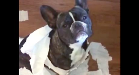 Видео с собакой-ябедой насмешило интернет