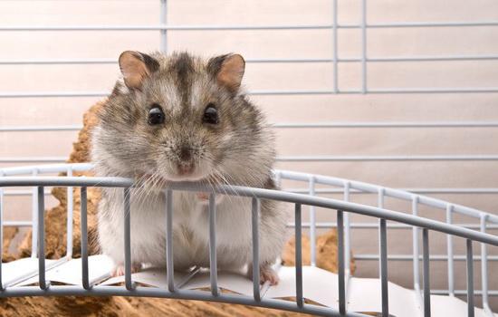 Как ухаживать за хомяком: учимся любить домашних животных
