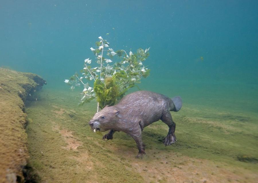 Фотограф провел 4 года под водой ради одного снимка