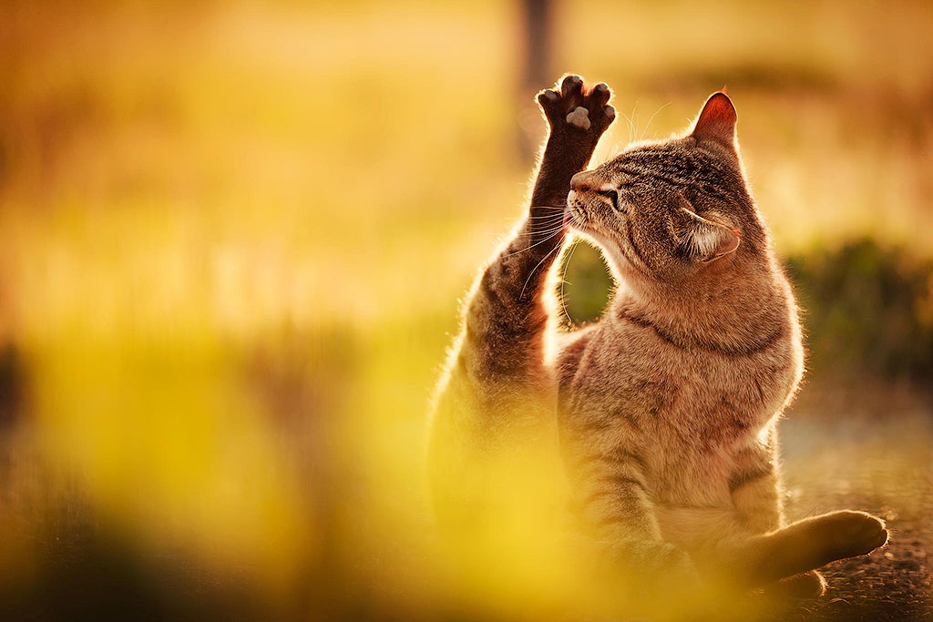 31 причина обменять жену на кошку