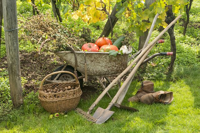 Календарь работ в конце августа. Завершаем уборку урожая и думаем о будущем