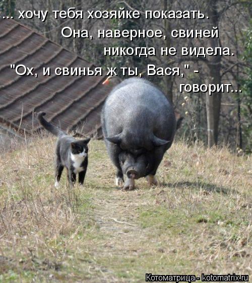 """Котоматрица: ... хочу тебя хозяйке показать. Она, наверное, свиней  никогда не видела. """"Ох, и свинья ж ты, Вася,"""" -  говорит..."""