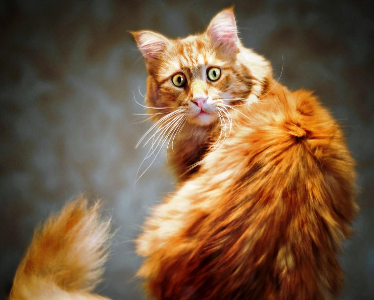 Война с котом. Или как я пыталась обезопасить себя от кошачьего терроризма…