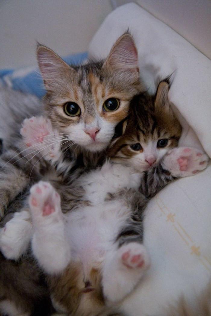13. котенок, кошка