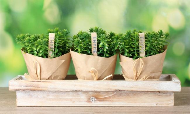 12 овощей, которые легко вырастить дома