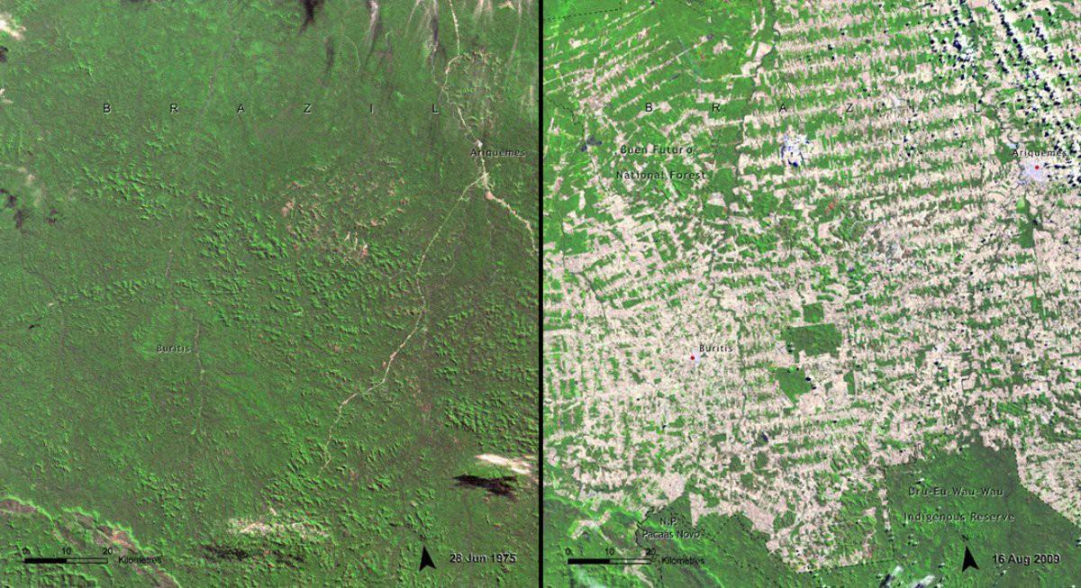 Леса в Рондонии, Бразилия история, факты