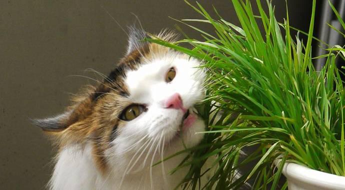 Тайны самолечения животных