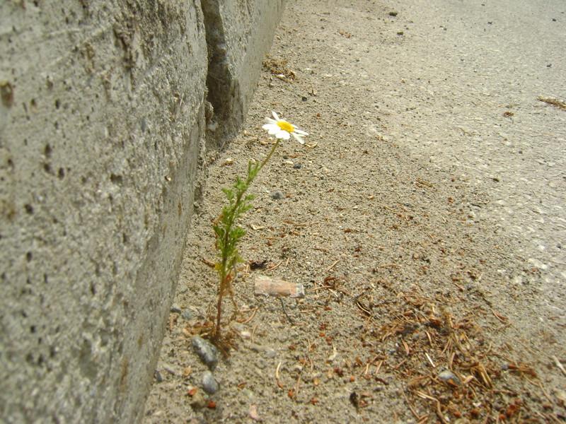 Мир растений — крупным планом