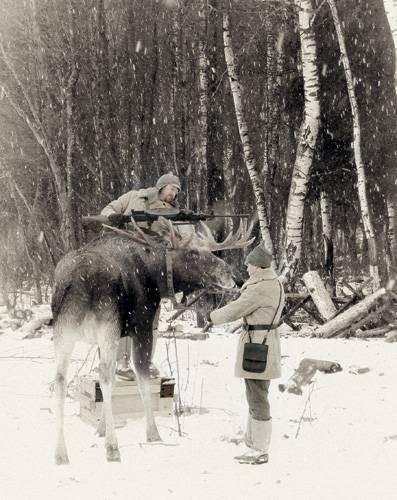 Лоси оправдали возложенные на них надежды, пугая до смерти финских солдат война, факты, финская война