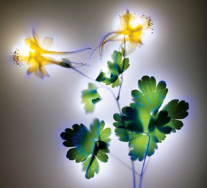 Электрические цветы фотографа Robertа Buelteman