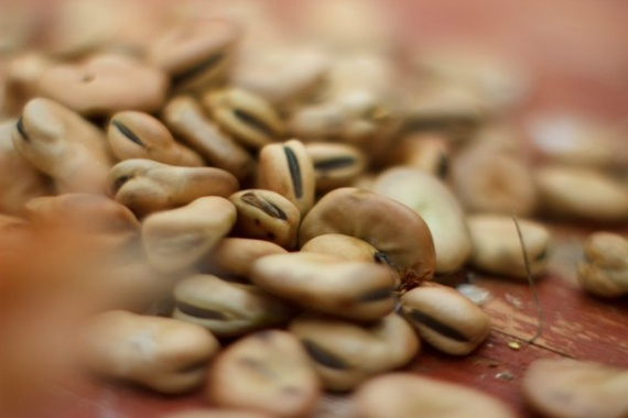 бобы банк семян