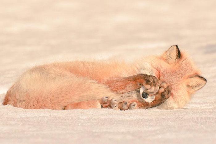 Милейшие животные с острова Хоккайдо