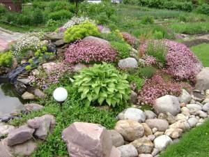 Растения в альпийской горке