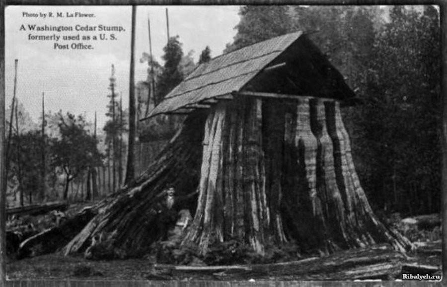 дома в пнях