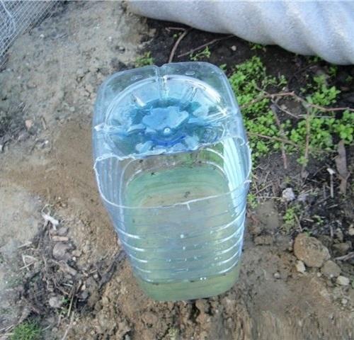 Капельное орошение грядок из пластиковых бутылок