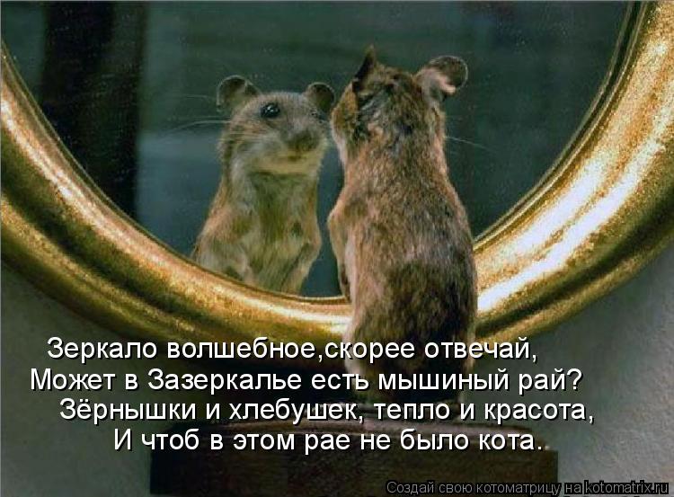 Котоматрица: Зеркало волшебное,скорее отвечай, Может в Зазеркалье есть мышиный рай? И чтоб в этом рае не было кота. Зёрнышки и хлебушек, тепло и красота,