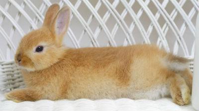 СМИ: в Дании радиоведущий убил кролика в прямом эфире, чтобы привлечь внимание к защите животных