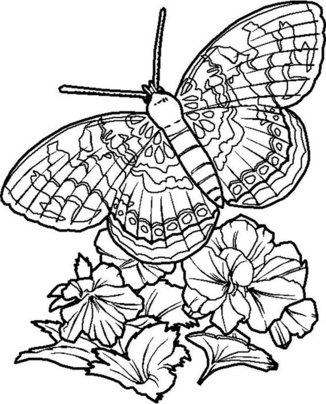 Трафареты. Шикарные большие бабочки!!!