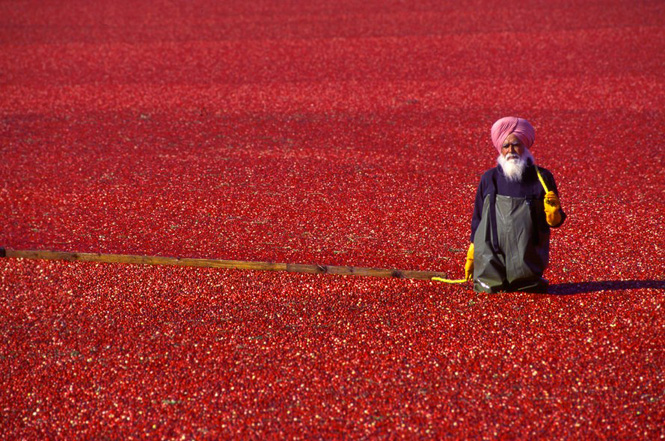 Красные клюквенные моря