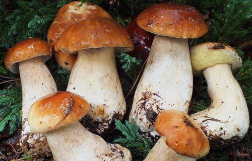 Как посадить грибами