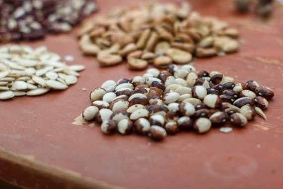 фасоль банк семян