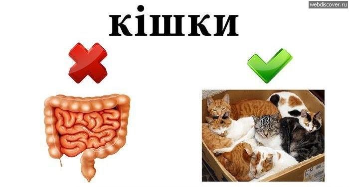 Приказываю говорить на украинском языке!