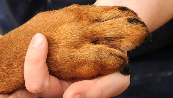 В Чехии собака откопала клад возрастом в три тысячи лет