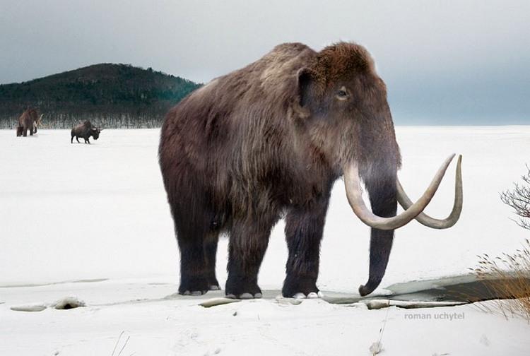 Палеонтологи узнали, от какой боли страдали мамонты