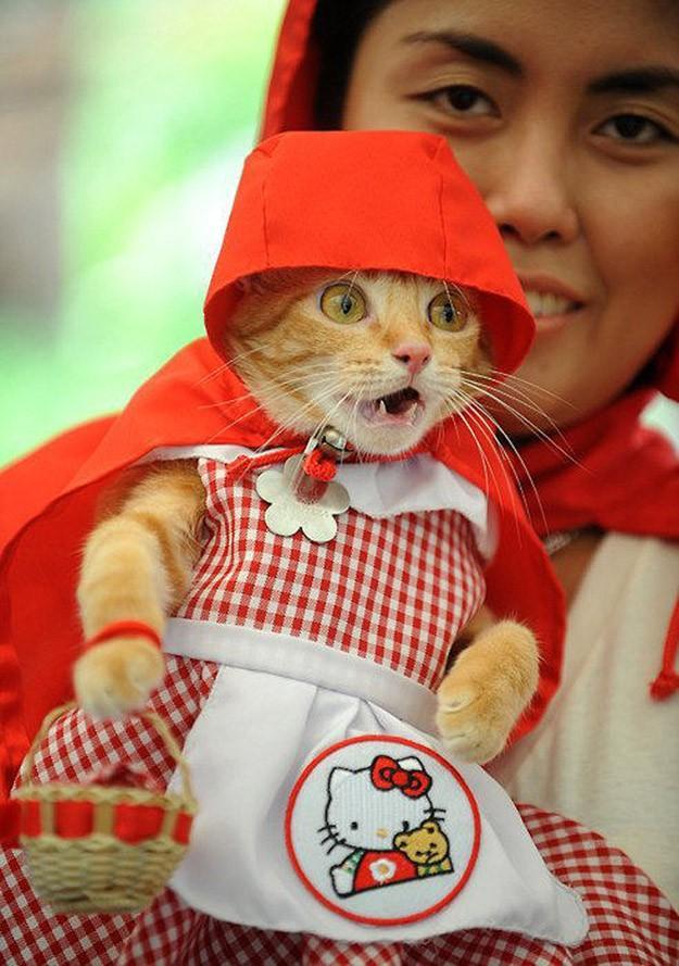lolcats52 100 лучших фотографий кошек всех времен и народов