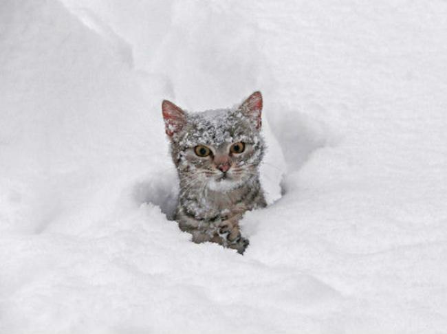 Всем самой лучшей зимы!