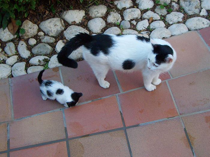 15. котенок, кошка