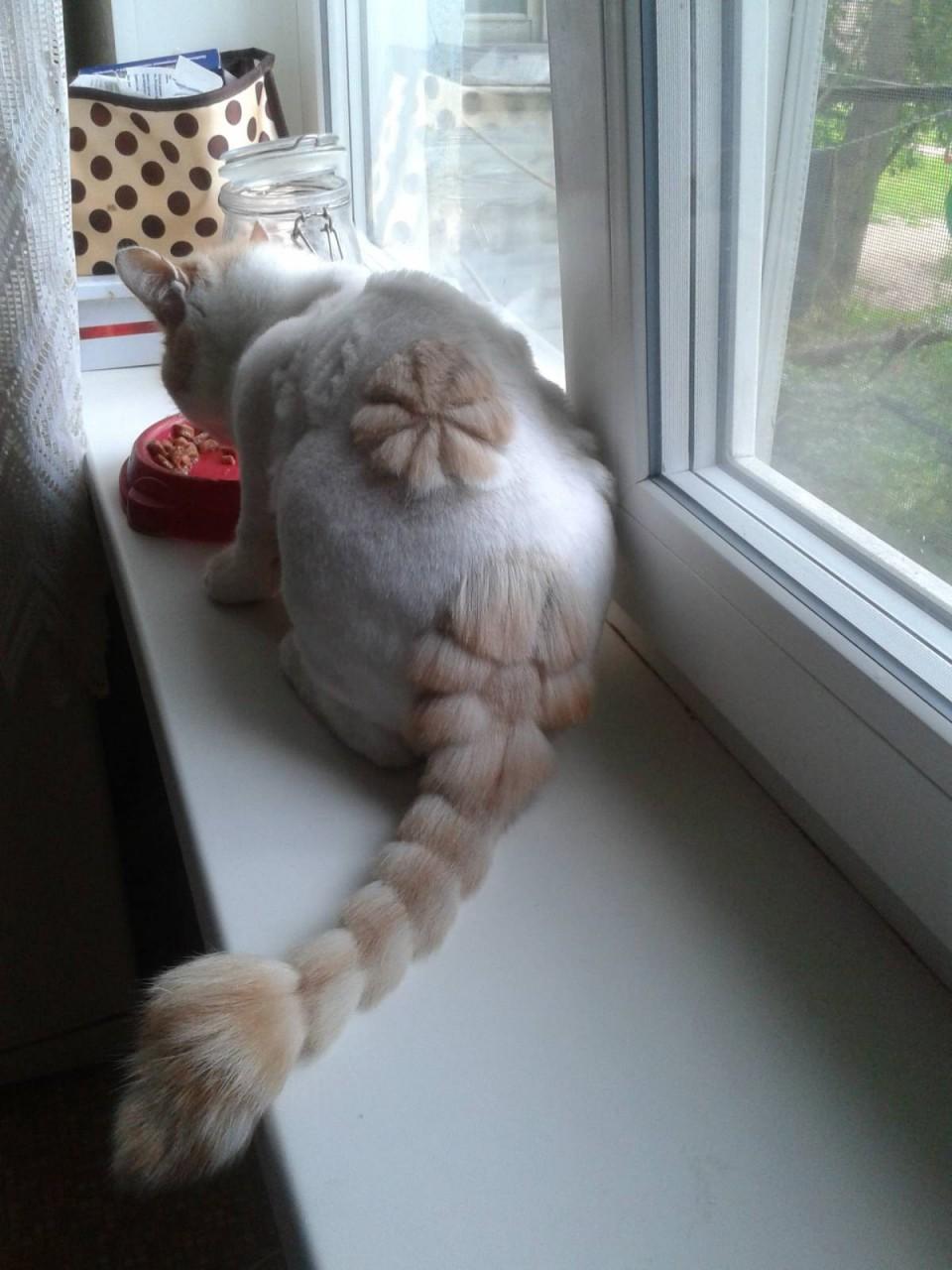 Как подстричь кота в домашних условиях : побрить самому, подстричь 94