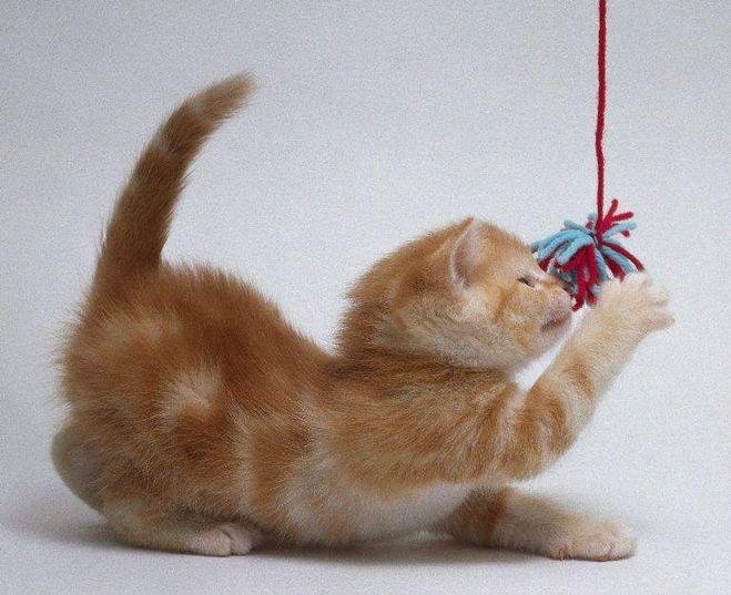 Котенок бантик в кукольном домике