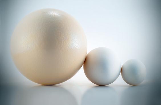 Вся правда об идеальных  яйцах