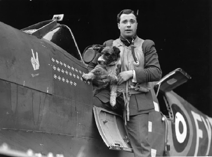 Милая собака Раф - талисман командира истребителей английских ВВС.