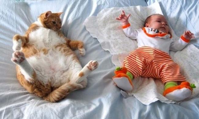 20 доказательств того, что детям нужны коты )))