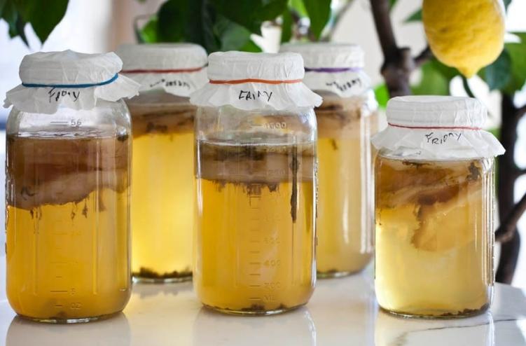 Чайный гриб – антибиотик из банки