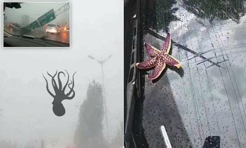 В Китае из-за тайфуна пошел дождь из осьминогов и других морских существ