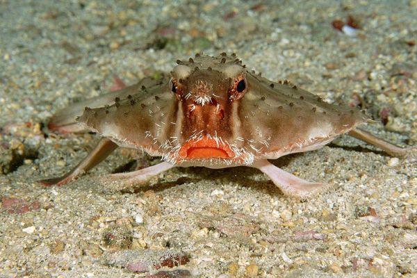 Интересные факты из жизни морского нетопыря