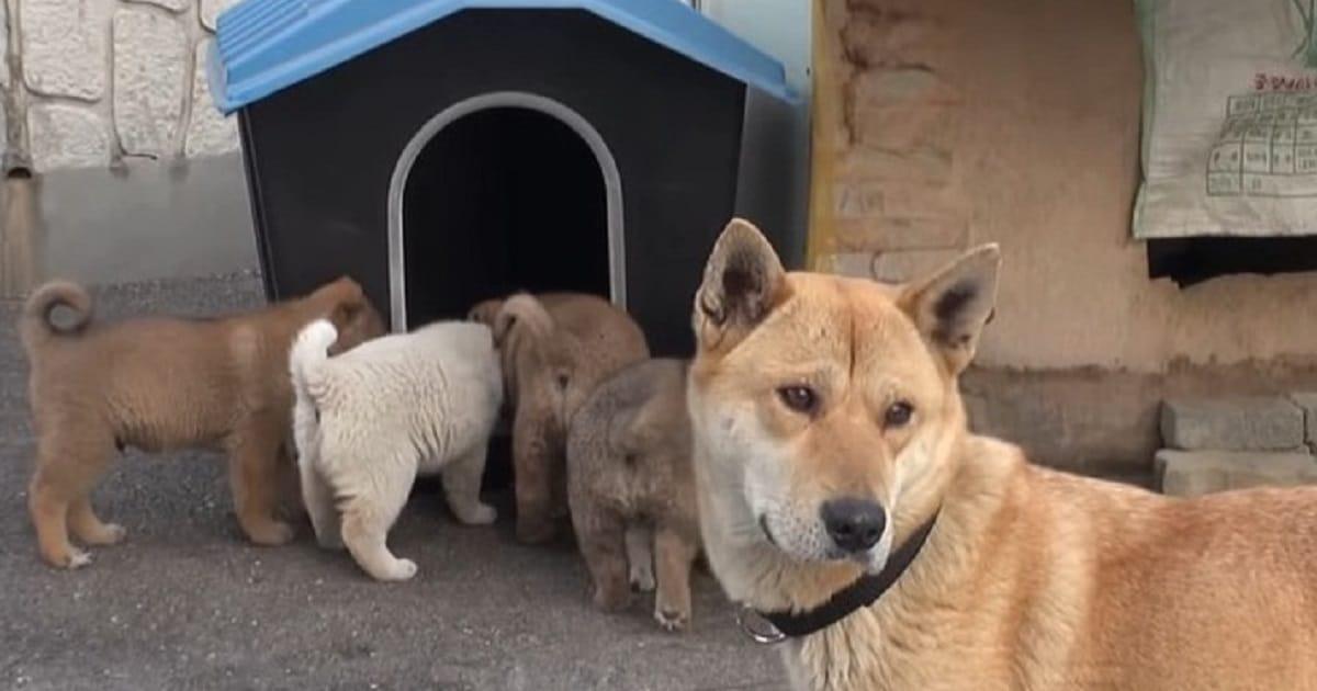 Собака и ее крохотные щенки пришли в дом к незнакомцу… Он опешил, а потом принял необычное решение!