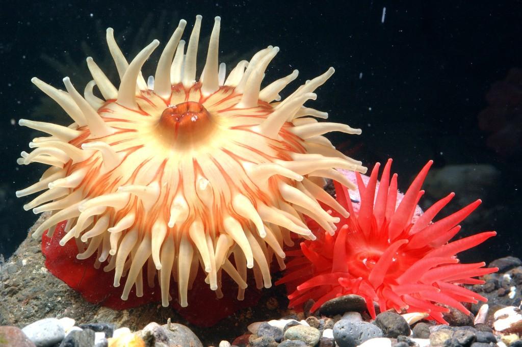 Невероятная красота подводного мира Камчатки